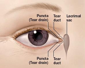 Eye Plugs